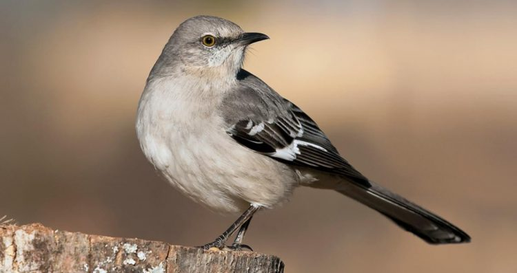 What We Expect Mockingbird From Go Set A Watchman